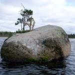 Дерево на камне